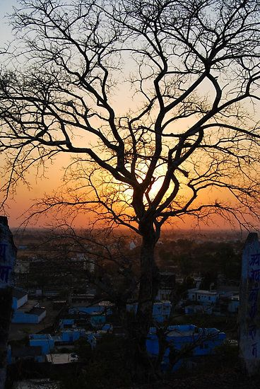 sunset behind the tree - Sunset photography by Neha Gupta
