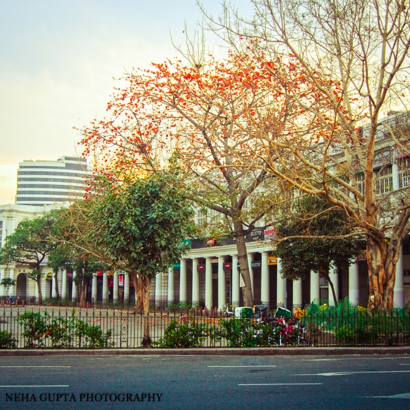 Palash Tree at Connaught place