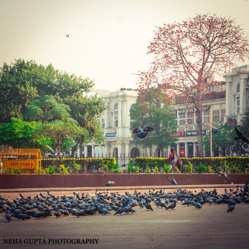 Palash tree at connaught place,new delhi